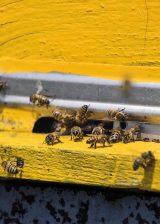 Unternehmen setzten sich für Bienen-Artenschutz ein